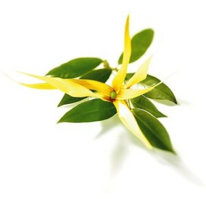 savon-ylang-ylang-amande-douce-peau-seche